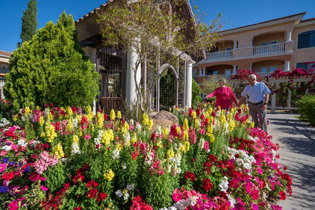 The Terraces in full bloom