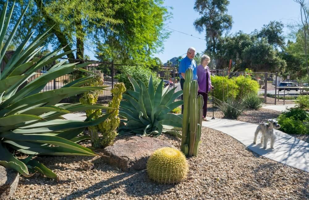 Couple walking the dog near cactus 1
