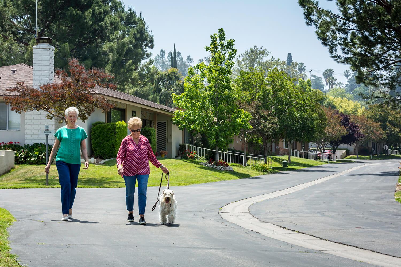 2 women walking dog down a main street
