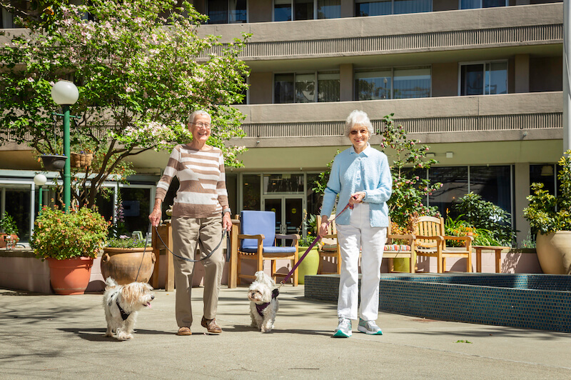 two female residents walk dogs in piedmont, oakland
