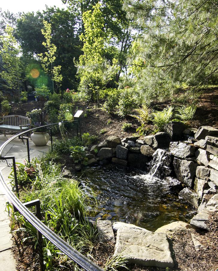 aug2017_rosemont_pond (1)