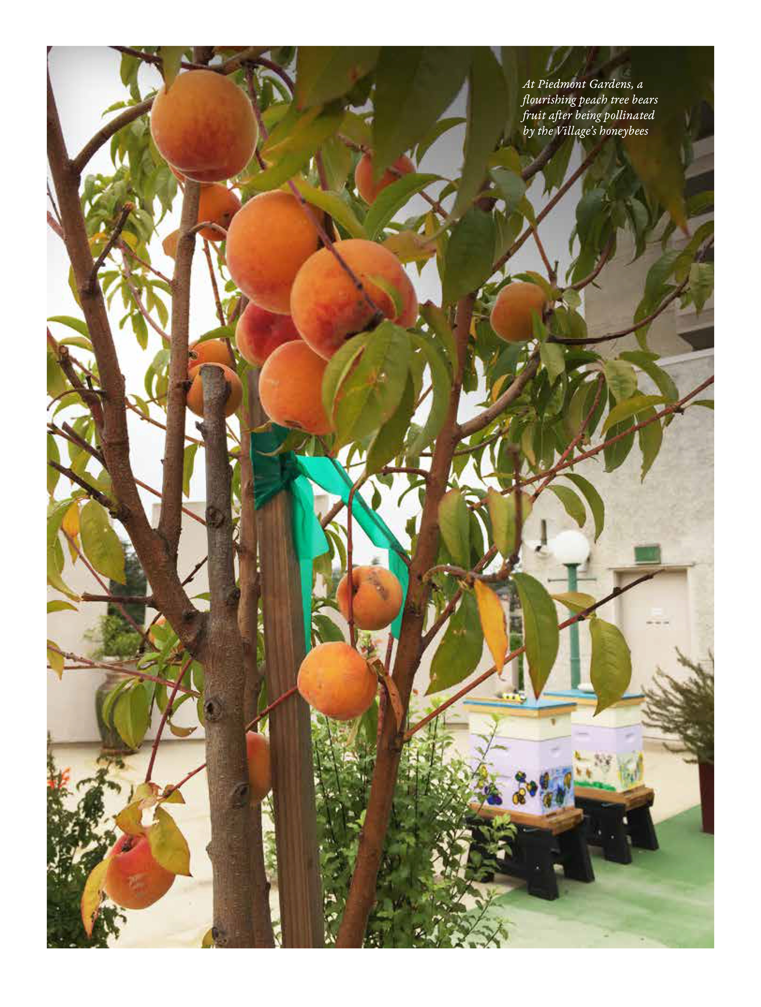 Innovators-Piedmont Gardens-low res-2.jpg